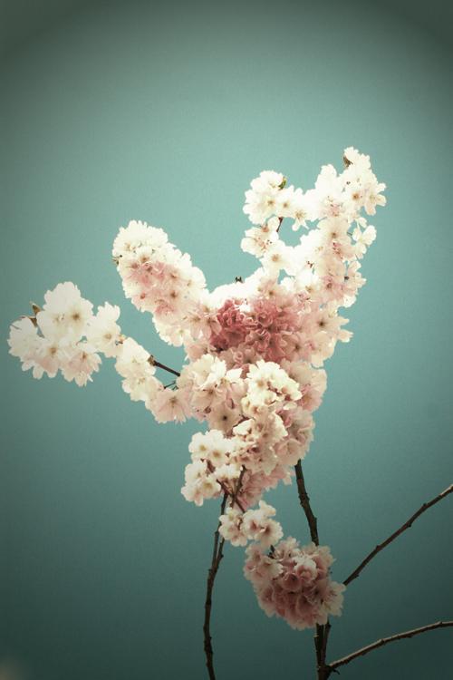 fresh-spring-lg