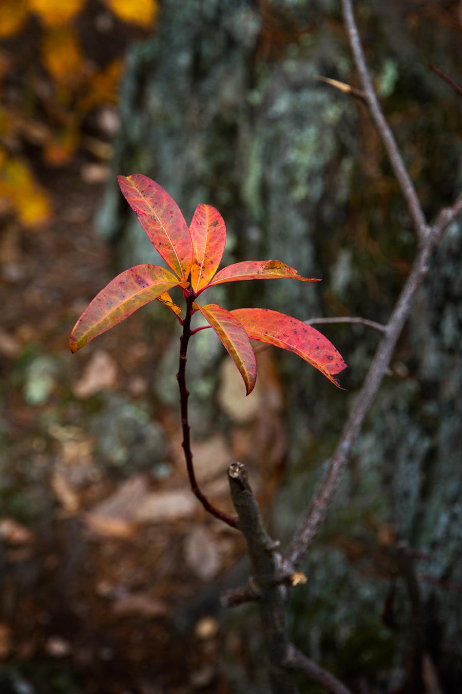 hike-plant