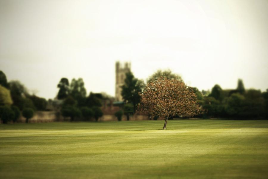 muted-tree