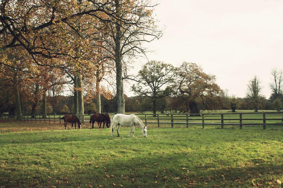 Blenheim Horses