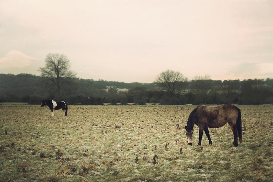 frosty-fields