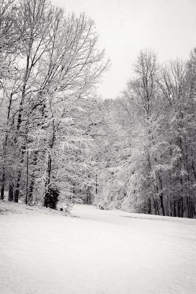 snowed-trees