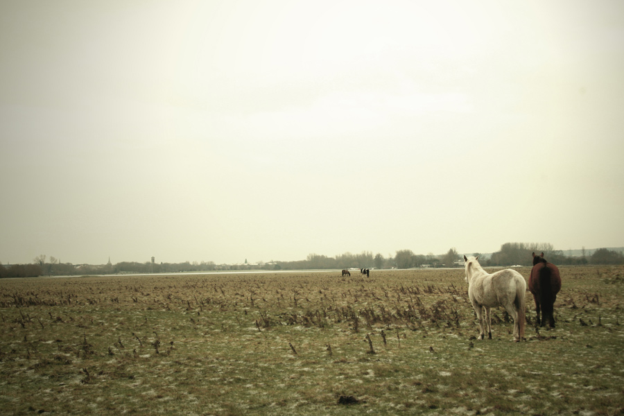 oxford-horses