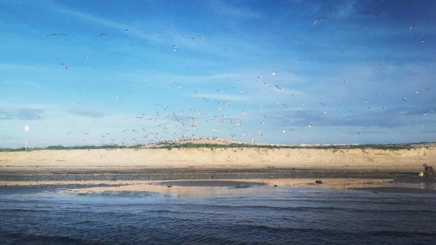 beach-gulls
